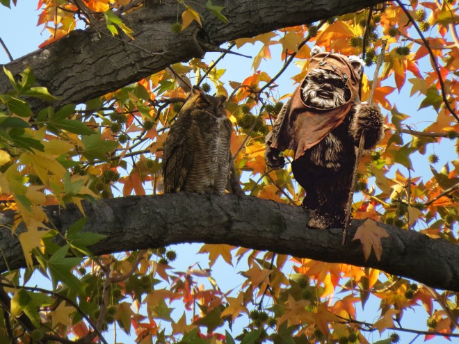 owl and ewok