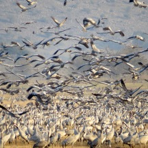 cranes in crowd 2