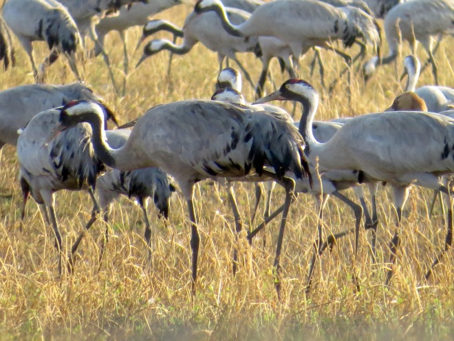 cranes up close