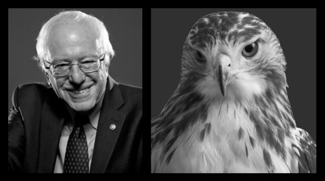 Sanders_vs_hawk_final