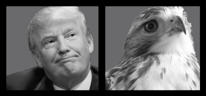 Trump_vs_hawk_final