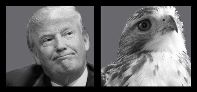 Trump_vs_hawk_final